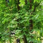 grimpe arbre 2