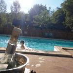 piscine et rose